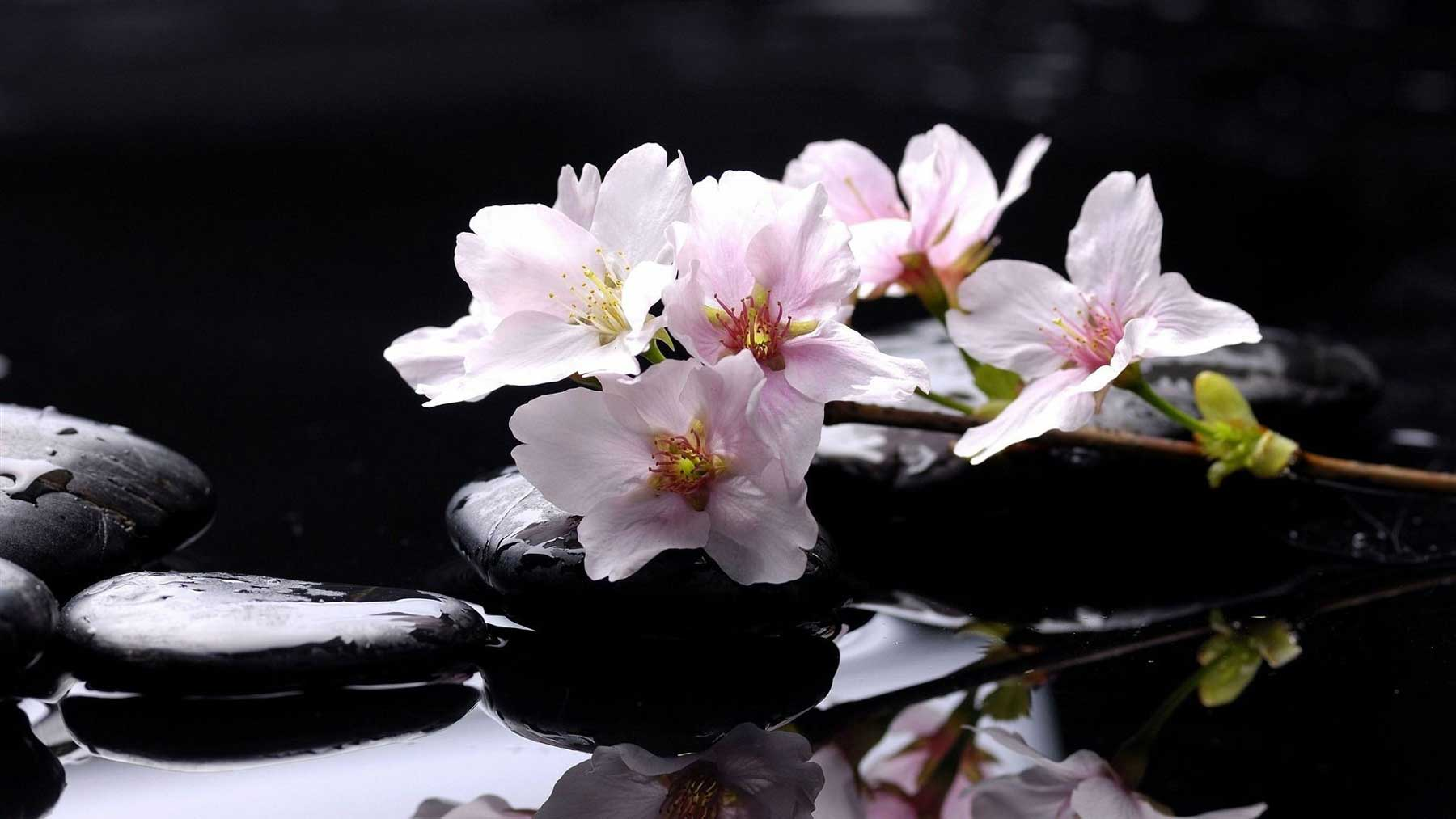 theraphy spa nature clean foot flowers colors sakura flower desktop background Inspirational Zen Stones Flowers Desktop Wallpapers Wallpaper Download